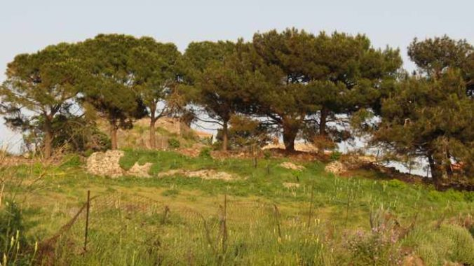 a line of trees at the edge of a field in Molyvos on Lesvos island